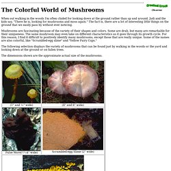 The Colorful World of Mushrooms