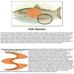 The Earth Life Web, Fish Muscles