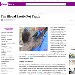 The Illegal Exotic Pet Trade