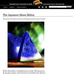 The Japanese Moon Melon