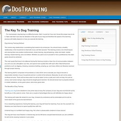 5 Useful Dog Obedience Training Tips