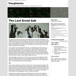 The Last Great Auk