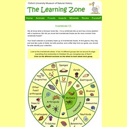 The Learning Zone: Invertebrate I.D.