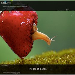 The life of a snail