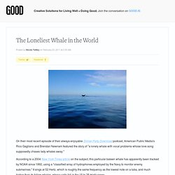 The Loneliest Whale in the World