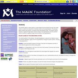 The MAGIC Foundation Anatomy