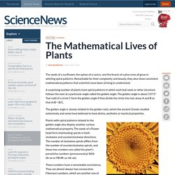 The Mathematical Lives of Plants