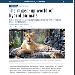 #11 The mixed-up world of hybrid animals