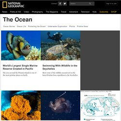 National Geographic: The Ocean