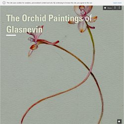 The Orchid Paintings of Glasnevin