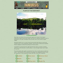 The Plants of the Rainforest