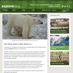 The Polar Bear's New Name Is…