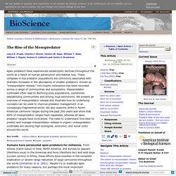 The Rise of the Mesopredator