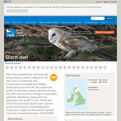 The RSPB: Barn owl