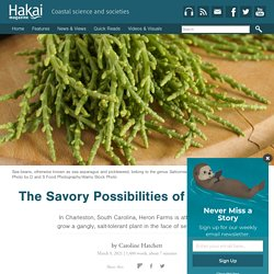 The Savory Possibilities of Sea Beans
