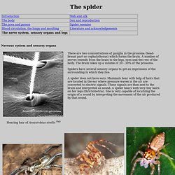 The spider sensory organs and legs