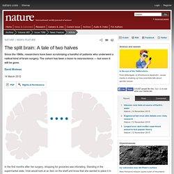 The split brain: A tale of two halves