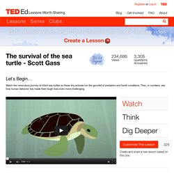 The survival of the sea turtle - Scott Gass