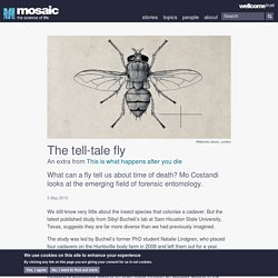The tell-tale fly