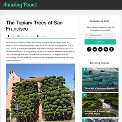 The Topiary Trees of San Francisco