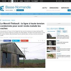 Le Mesnil-Thébault : la ligne à haute tension condamnée pour avoir rendu malade les vaches - France 3 Basse-Normandie