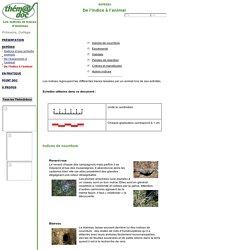 Thém@doc - Les indices et traces d'animaux