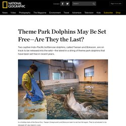 Theme Park Dolphins May Be Set Free—Are They the Last?
