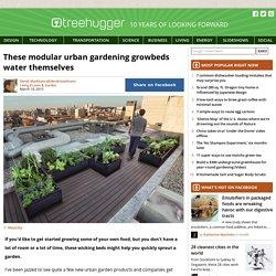 These modular urban gardening growbeds water themselves