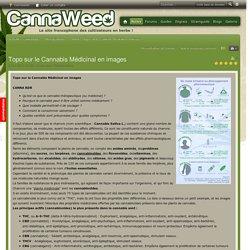 Topo sur le Cannabis Médicinal en images - Thérapeutique - Articles - Actualités cannabique