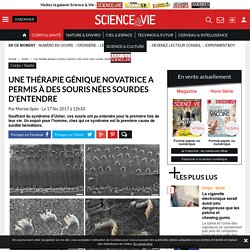 Une thérapie génique novatrice a permis à des souris nées sourdes d'entendre - Science-et-vie.com