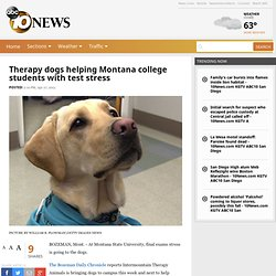 Therapy dogs helping Montana college students with test stress - Watercooler Story