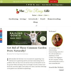 Get Rid of These Common Garden Pests Naturally! - The Free Range Life