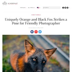 Let These Photos Take You Inside the Life of a Cross Fox