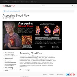 Health Centers - Cardiovascular Health - Cardiovascular Continuum - Assessing Blood Flow