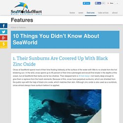10 Things You Didn't Know About SeaWorld
