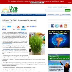 10 Things You Didn't Know About Wheatgrass