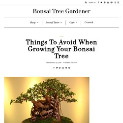 Things To Avoid When Growing Your Bonsai Tree