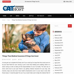 Things Than Medical Insurance Of Dogs Can Cover -