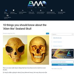 EWAO 10 things you should know about the 'Alien-like' Sealand Skull