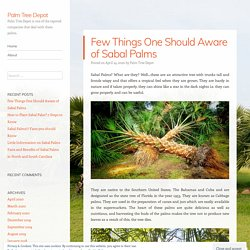 Few Things One Should Aware of Sabal Palms – Palm Tree Depot