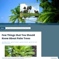Few Things that You Should Know About Palm Trees