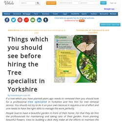 Things which you should see before hiring the tree specialist in yorkshire