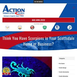 Think You Have Scorpions in Scottsdale?