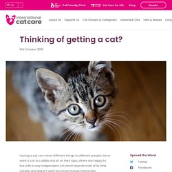 Thinking of getting a cat?