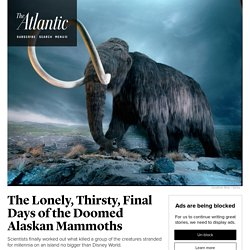 The Lonely, Thirsty, Final Days of the Doomed Alaskan Mammoths