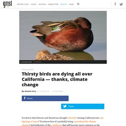Thirsty birds are dying all over California — thanks, climate change