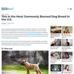 This Is the Most Commonly Banned Dog Breed in the U.S.