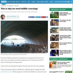 This is why we need wildlife crossings