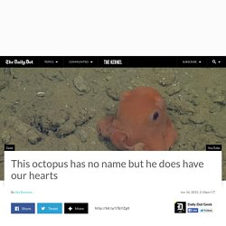 This octopus has no name but he does have our hearts