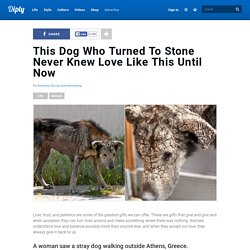 This Dog Who Turned To Stone Never Knew Love Like This Until Now